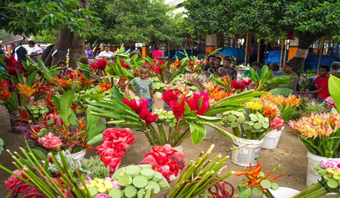Port Vila Market_Flower
